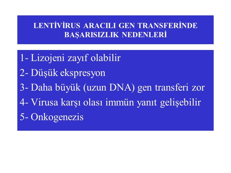 LENTİVİRUS ARACILI GEN TRANSFERİNDE BAŞARISIZLIK NEDENLERİ