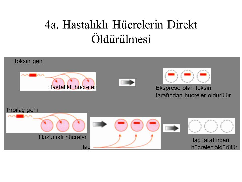 4a. Hastalıklı Hücrelerin Direkt Öldürülmesi