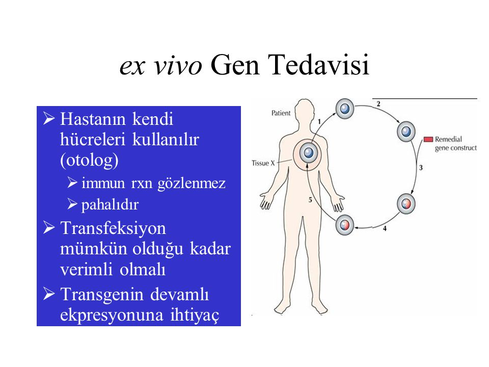 ex vivo Gen Tedavisi Hastanın kendi hücreleri kullanılır (otolog)