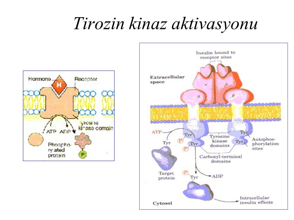 Tirozin kinaz aktivasyonu