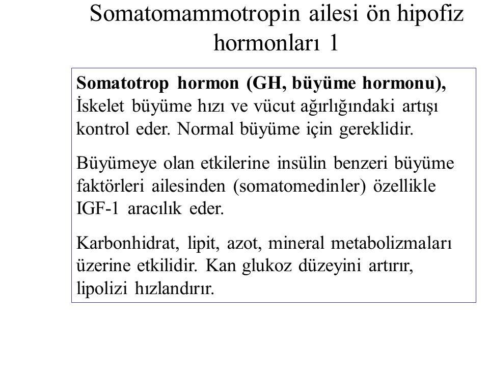 Somatomammotropin ailesi ön hipofiz hormonları 1