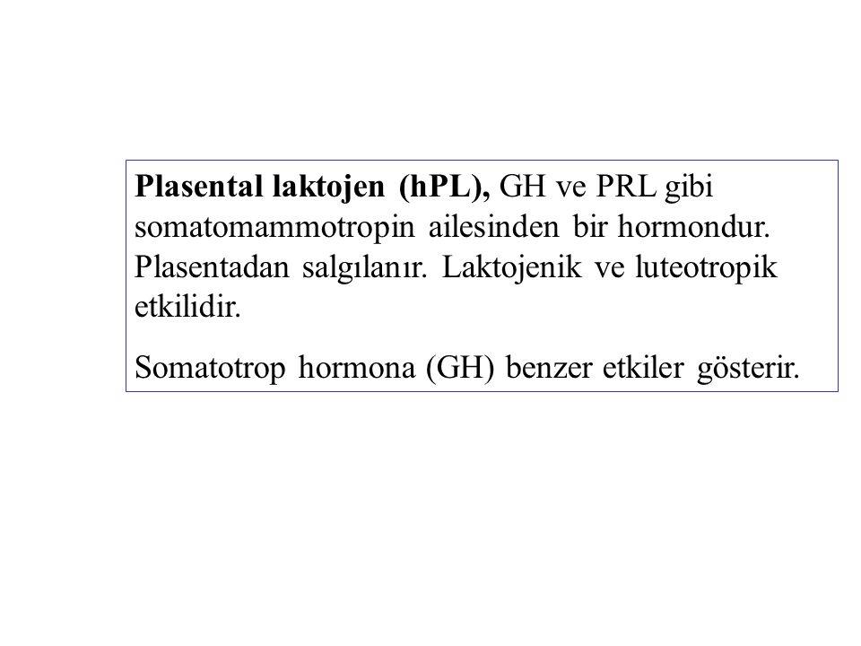 Plasental laktojen (hPL), GH ve PRL gibi somatomammotropin ailesinden bir hormondur. Plasentadan salgılanır. Laktojenik ve luteotropik etkilidir.