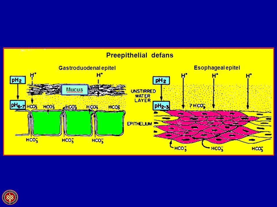 Gastroduodenal epitel