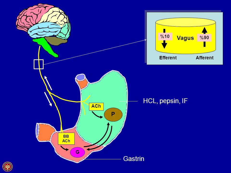 Vagus %10 %90 Efferent Afferent HCL, pepsin, IF ACh P BB ACh G Gastrin