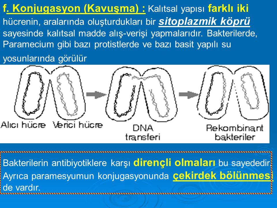 f. Konjugasyon (Kavuşma) : Kalıtsal yapısı farklı iki hücrenin, aralarında oluşturdukları bir sitoplazmik köprü sayesinde kalıtsal madde alış-verişi yapmalarıdır. Bakterilerde, Paramecium gibi bazı protistlerde ve bazı basit yapılı su yosunlarında görülür