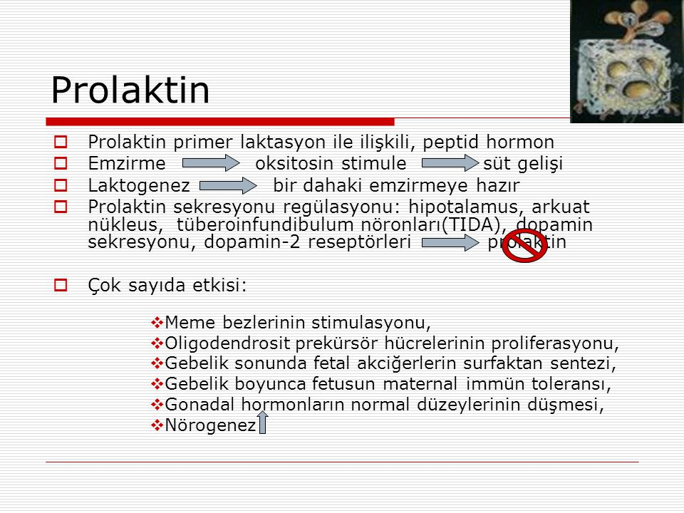 Prolaktin Prolaktin primer laktasyon ile ilişkili, peptid hormon