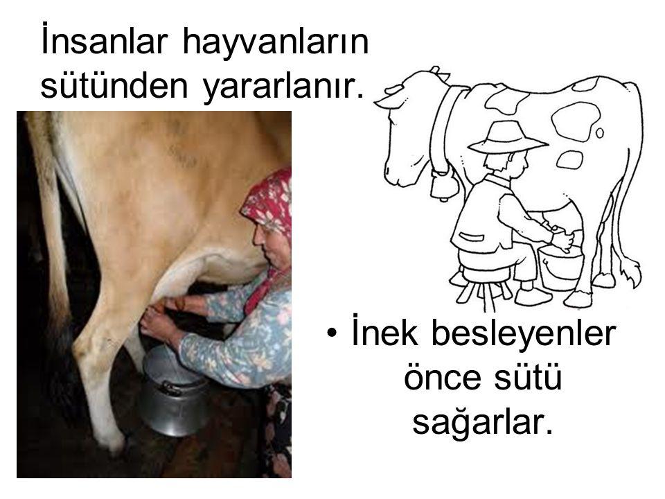 İnsanlar hayvanların sütünden yararlanır.