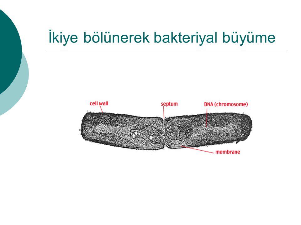 İkiye bölünerek bakteriyal büyüme