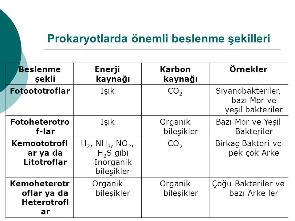 Prokaryotlarda önemli beslenme şekilleri