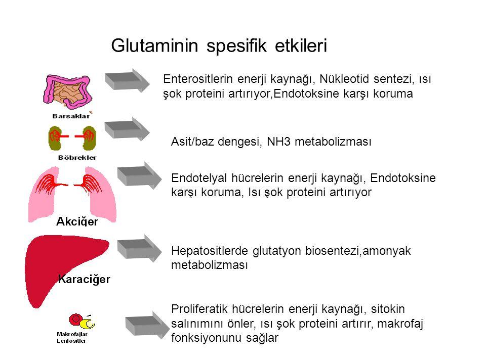 Glutaminin spesifik etkileri