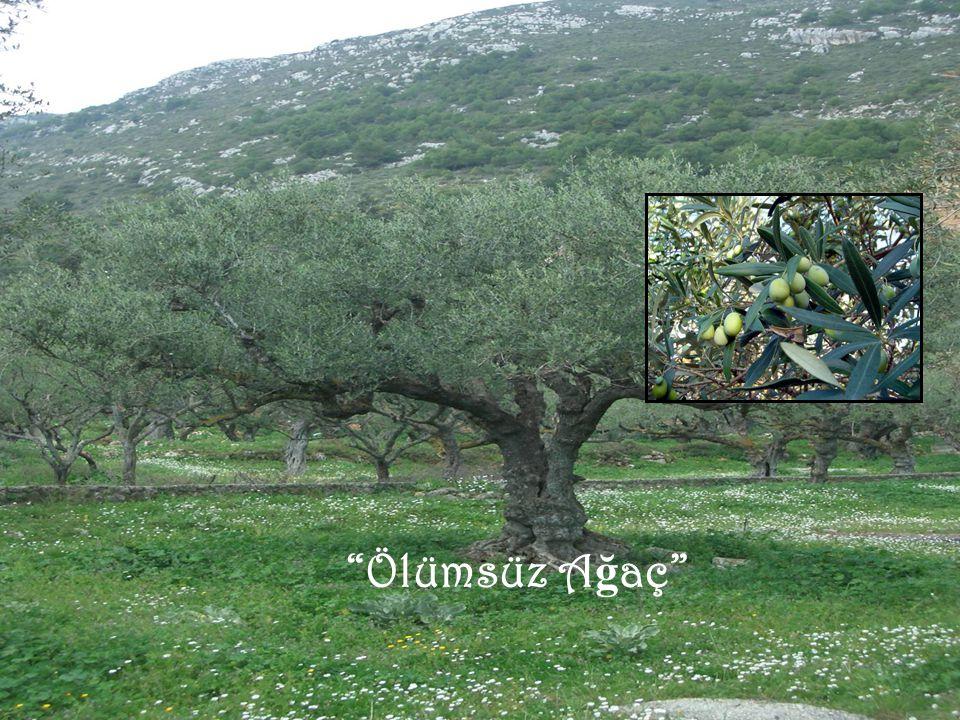 Ölümsüz Ağaç