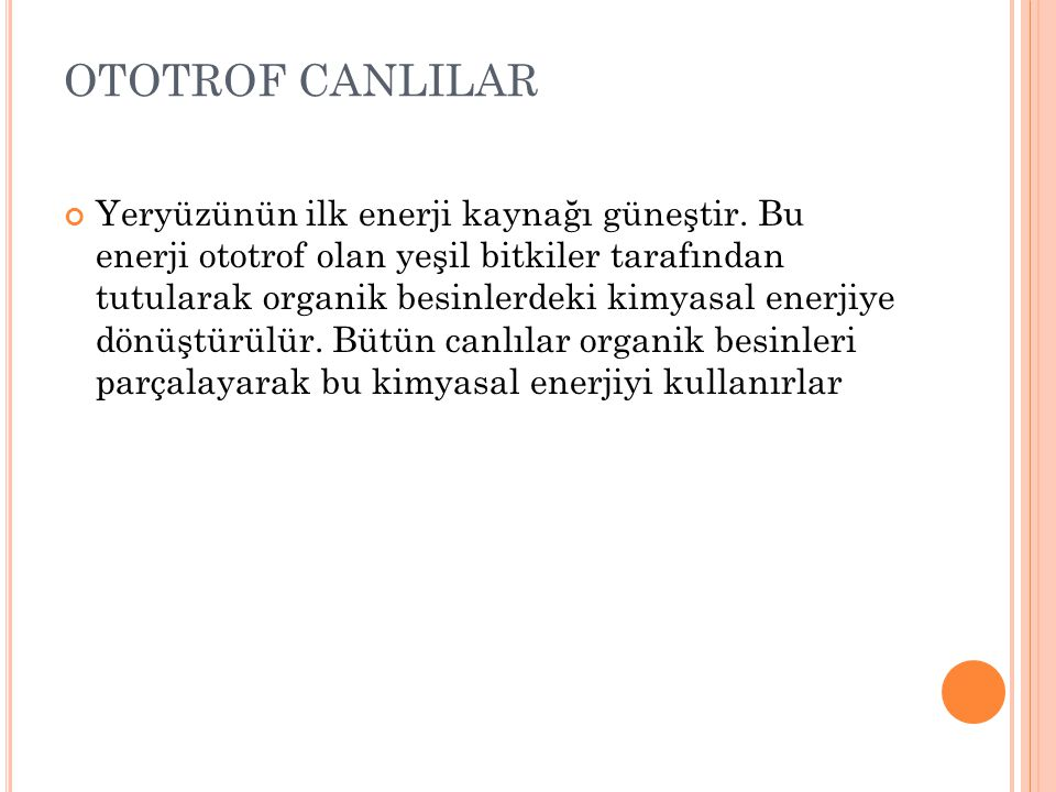 OTOTROF CANLILAR