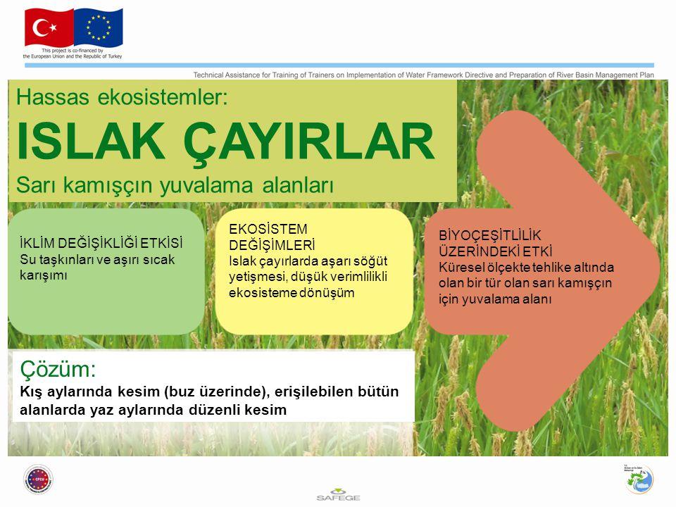 ISLAK ÇAYIRLAR Hassas ekosistemler: Sarı kamışçın yuvalama alanları