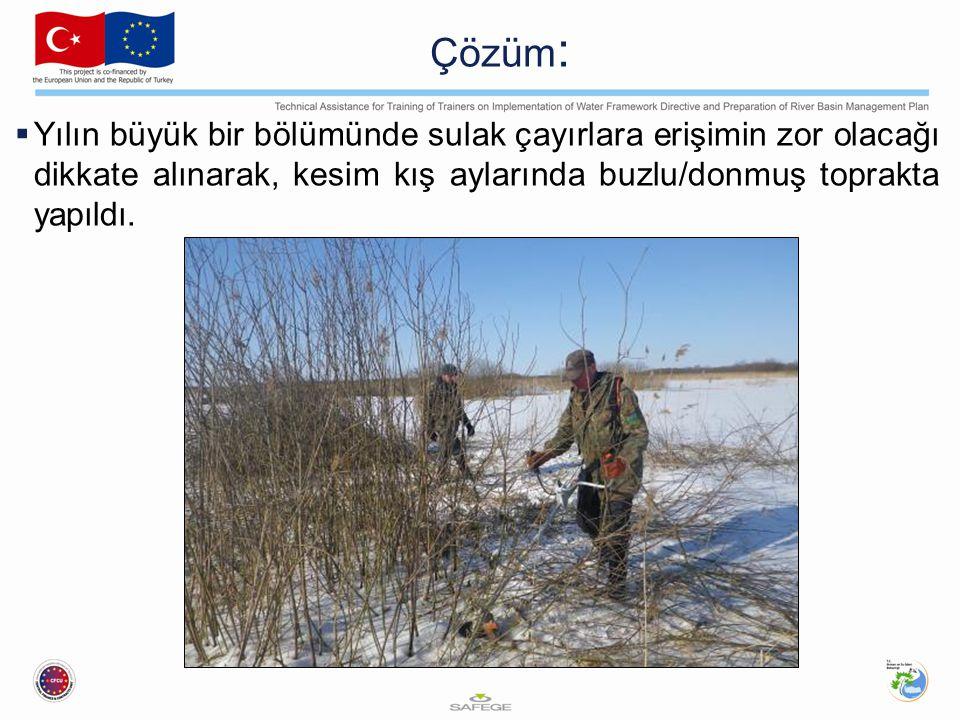 Çözüm: Yılın büyük bir bölümünde sulak çayırlara erişimin zor olacağı dikkate alınarak, kesim kış aylarında buzlu/donmuş toprakta yapıldı.