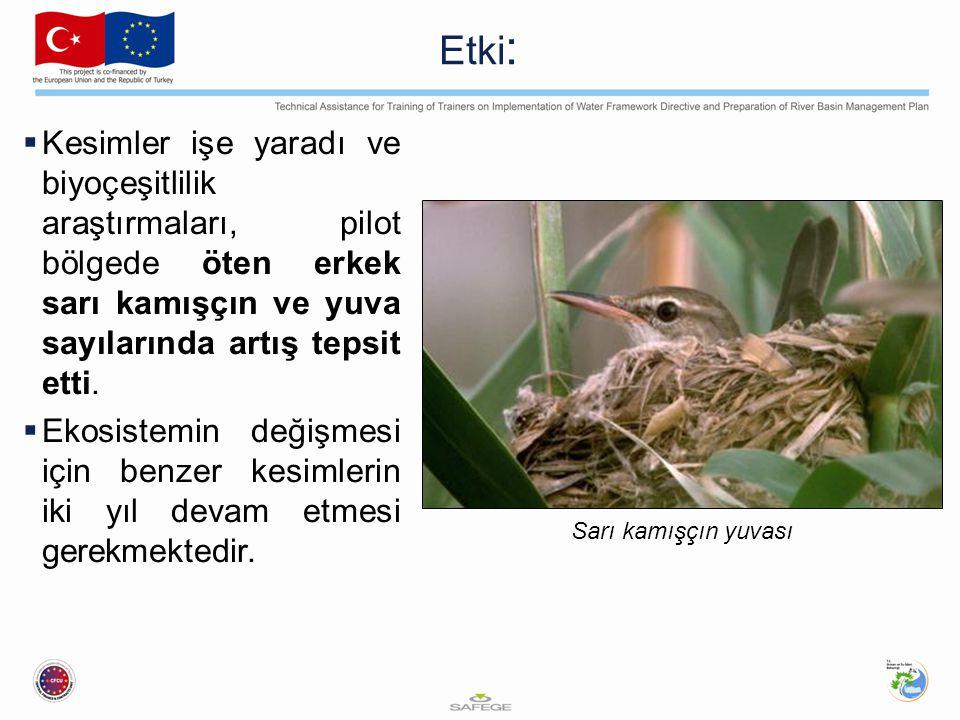 Etki: Kesimler işe yaradı ve biyoçeşitlilik araştırmaları, pilot bölgede öten erkek sarı kamışçın ve yuva sayılarında artış tepsit etti.