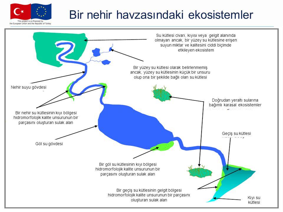 Bir nehir havzasındaki ekosistemler