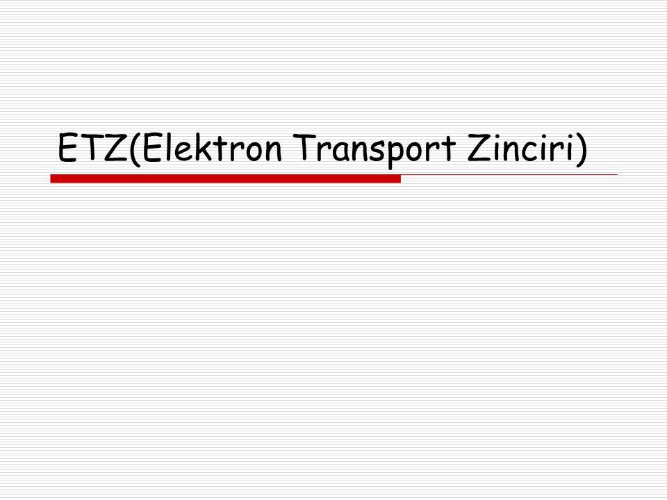 ETZ(Elektron Transport Zinciri)