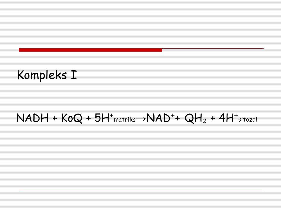 Kompleks I NADH + KoQ + 5H⁺matriks→NAD⁺+ QH₂ + 4H⁺sitozol