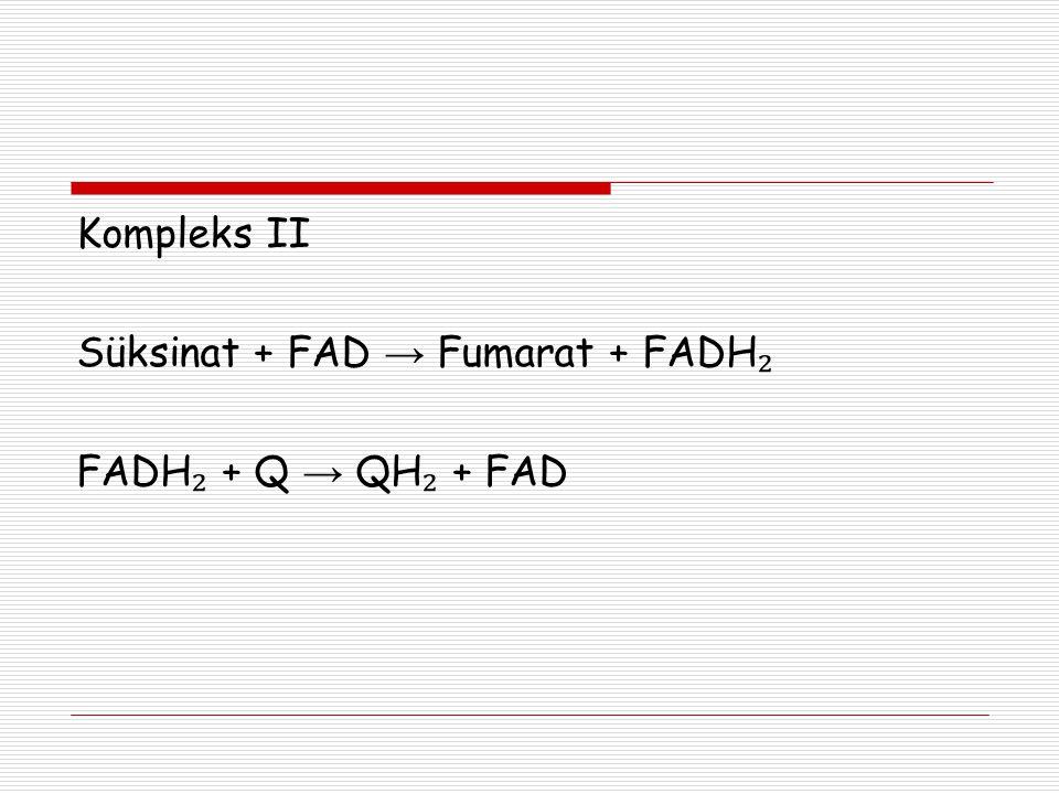 Kompleks II Süksinat + FAD → Fumarat + FADH₂ FADH₂ + Q → QH₂ + FAD