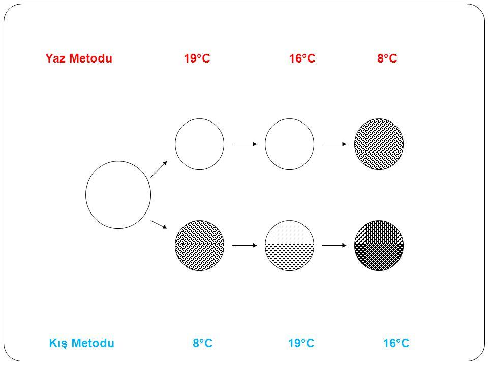Yaz Metodu 19°C 16°C 8°C