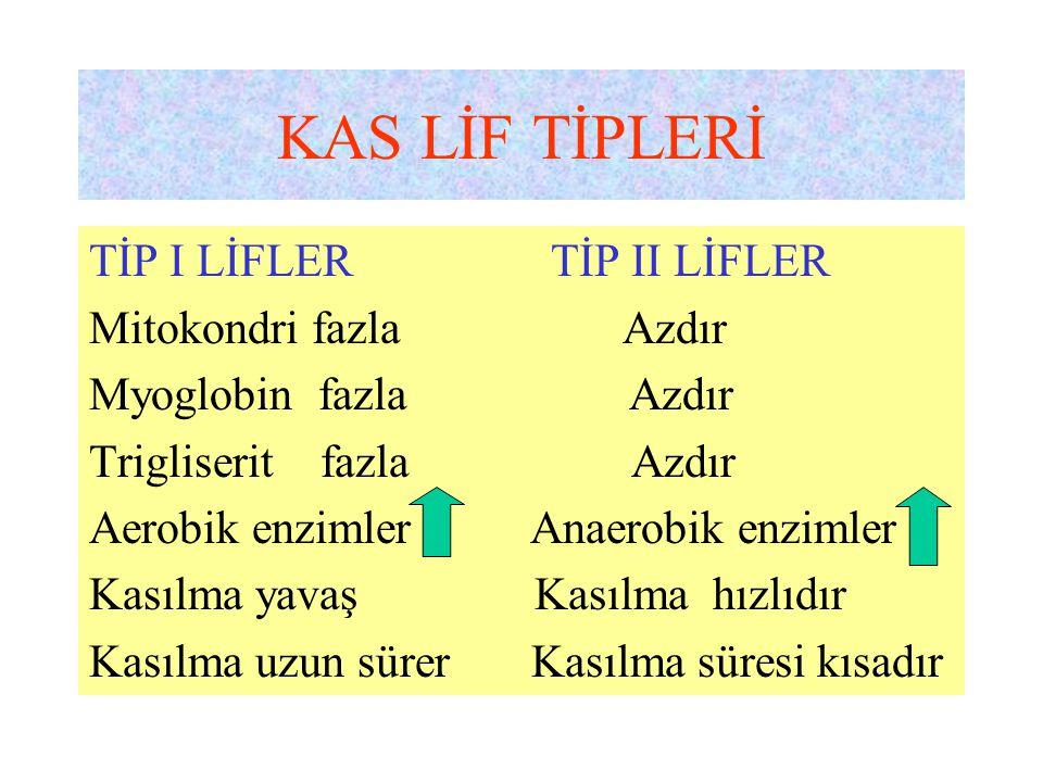 KAS LİF TİPLERİ TİP I LİFLER TİP II LİFLER Mitokondri fazla Azdır