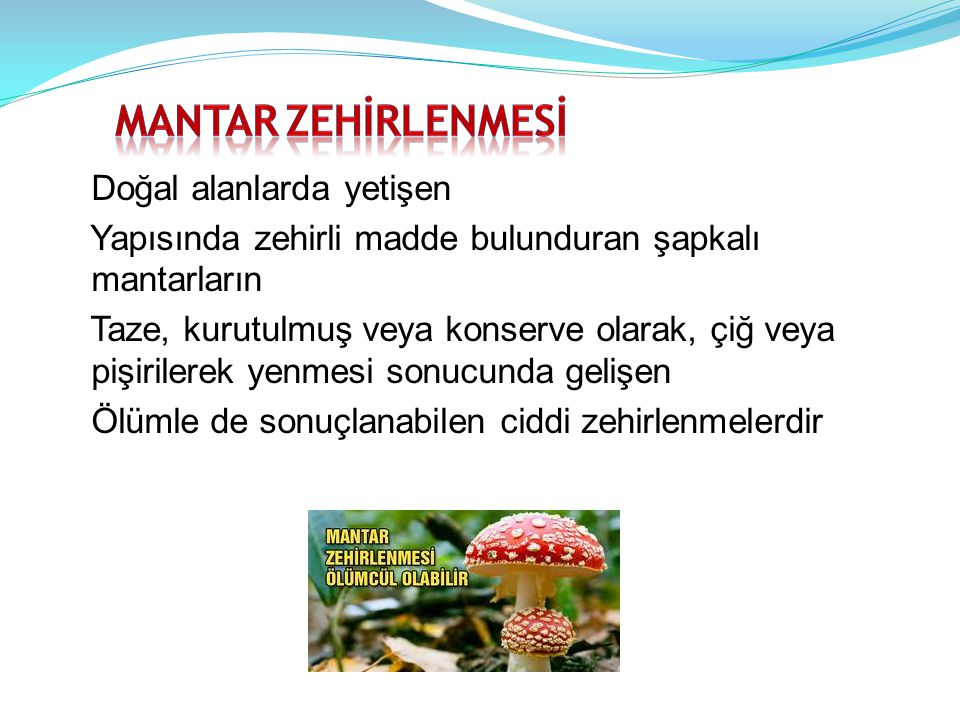 MANTAR ZEHİRLENMESİ