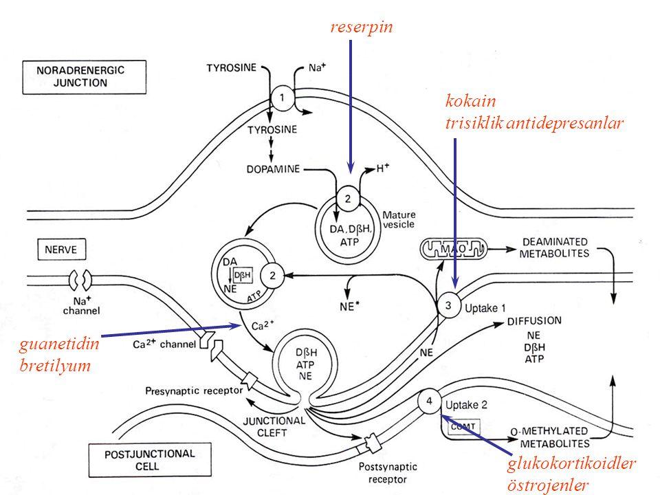 reserpin kokain trisiklik antidepresanlar guanetidin bretilyum glukokortikoidler östrojenler