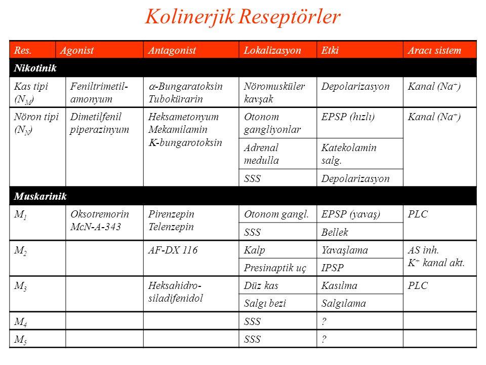 Kolinerjik Reseptörler