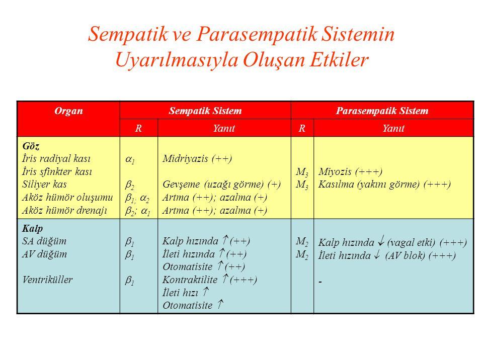 Sempatik ve Parasempatik Sistemin Uyarılmasıyla Oluşan Etkiler