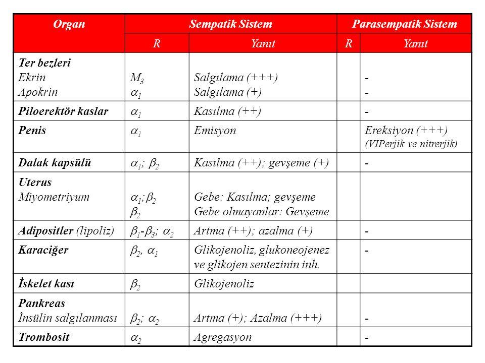 Organ Sempatik Sistem. Parasempatik Sistem. R. Yanıt. Ter bezleri. Ekrin. Apokrin. M3. 1. Salgılama (+++)