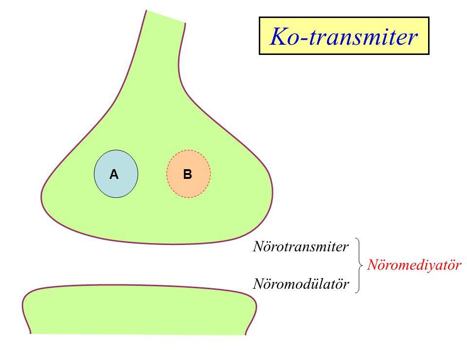 Ko-transmiter A B Nörotransmiter Nöromodülatör Nöromediyatör