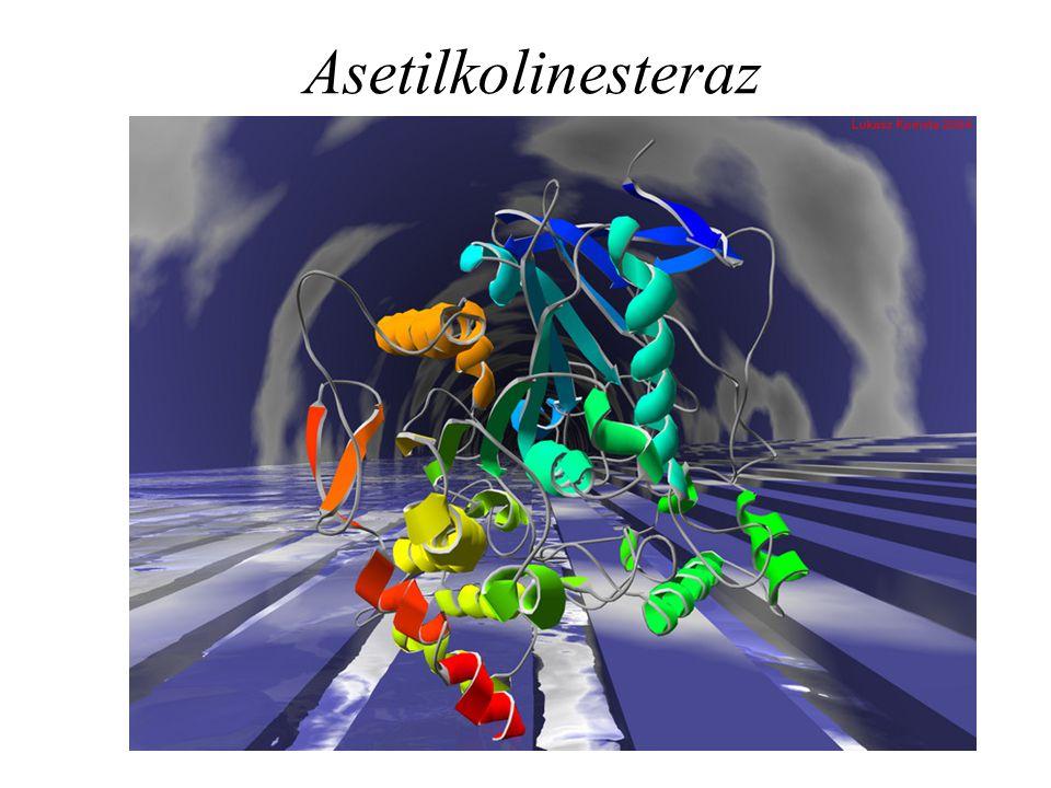 Asetilkolinesteraz