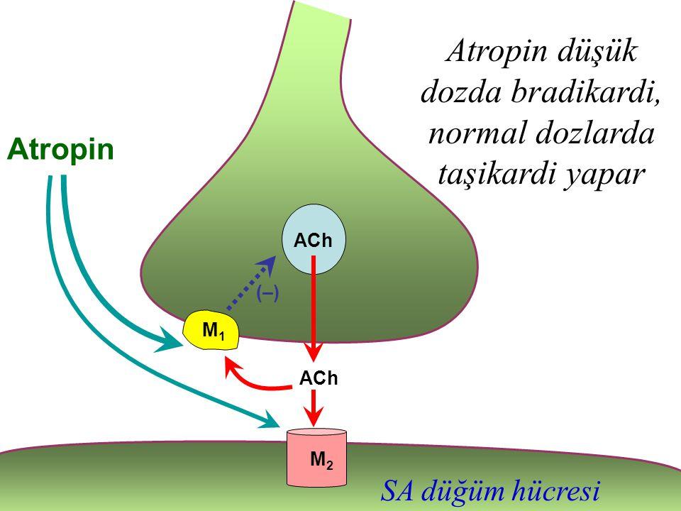 Atropin düşük dozda bradikardi, normal dozlarda taşikardi yapar