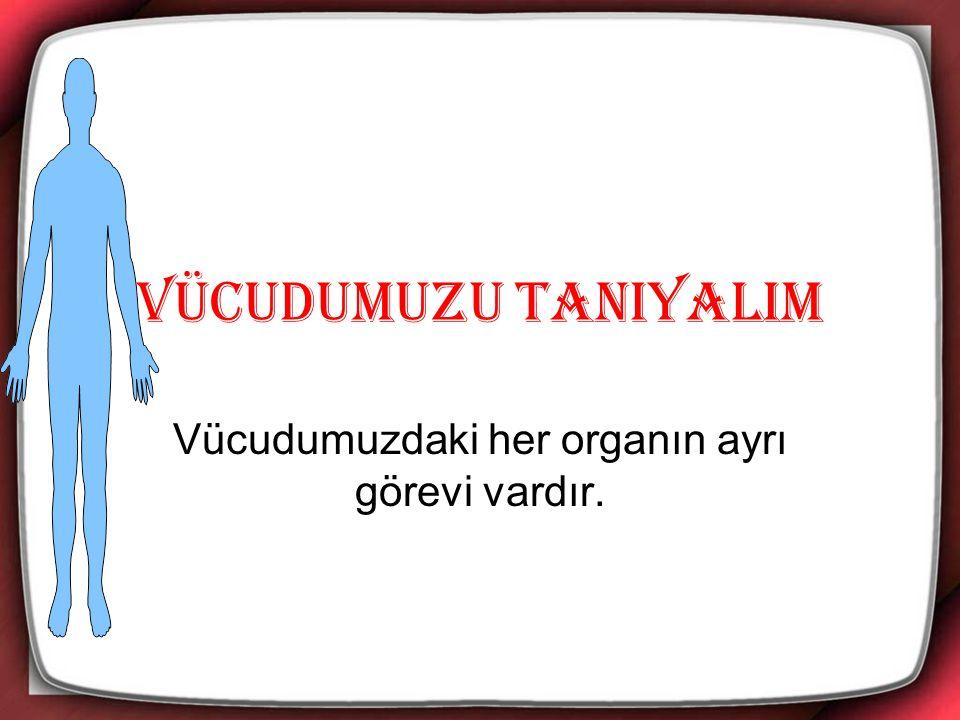 Vücudumuzdaki her organın ayrı görevi vardır.