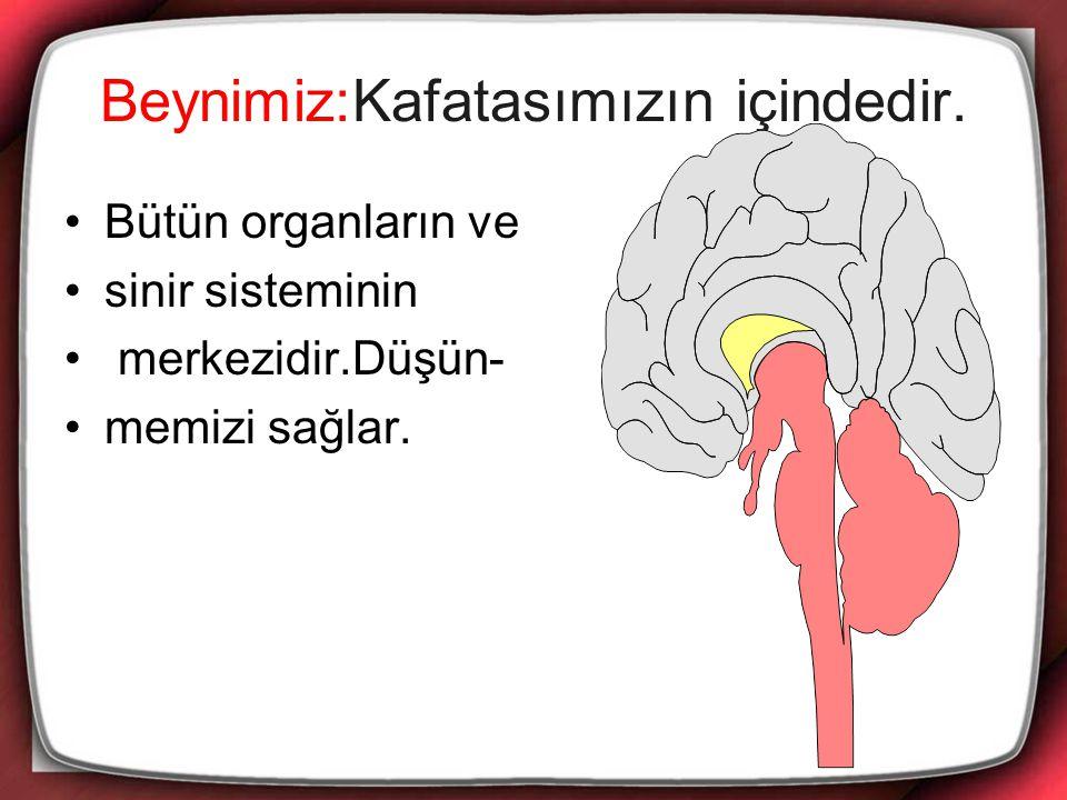 Beynimiz:Kafatasımızın içindedir.