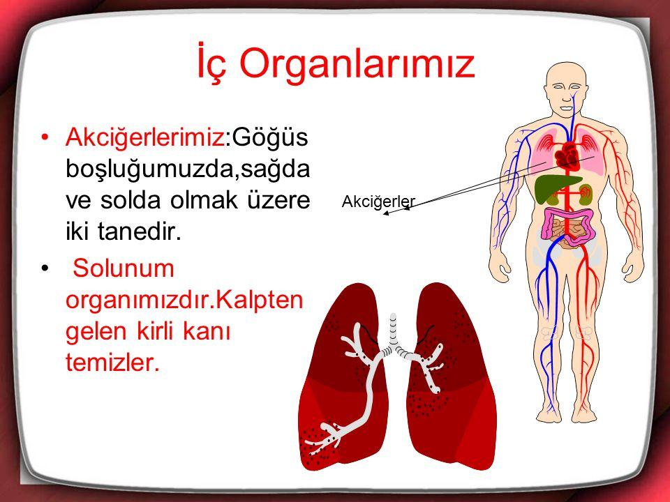 İç Organlarımız Akciğerlerimiz:Göğüs boşluğumuzda,sağda ve solda olmak üzere iki tanedir. Solunum organımızdır.Kalpten gelen kirli kanı temizler.