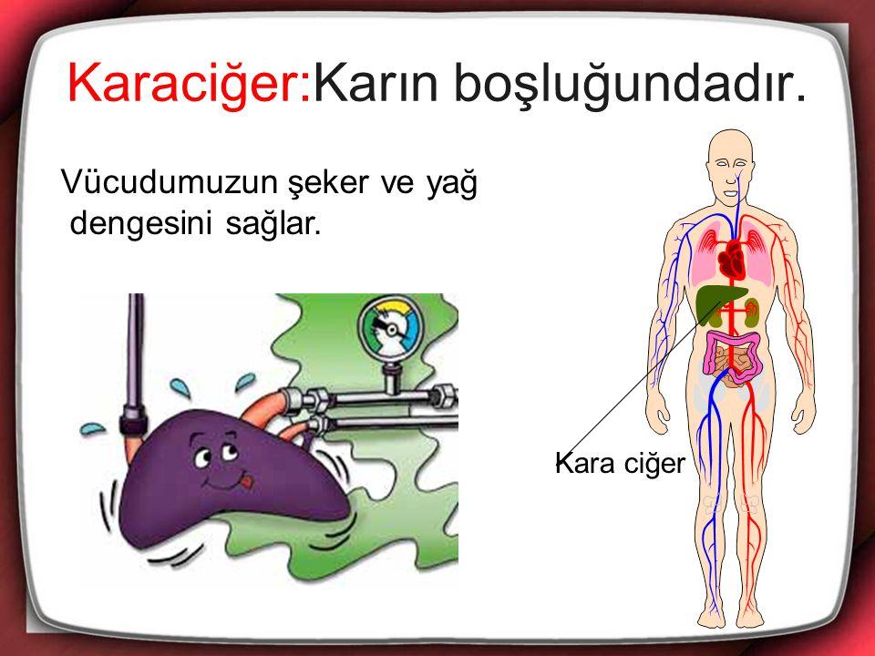 Karaciğer:Karın boşluğundadır.