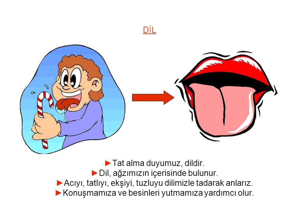 ►Tat alma duyumuz, dildir. ►Dil, ağzımızın içerisinde bulunur.