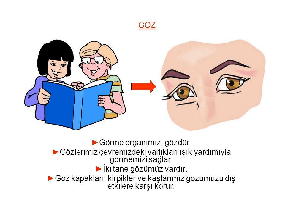 ►Görme organımız, gözdür.