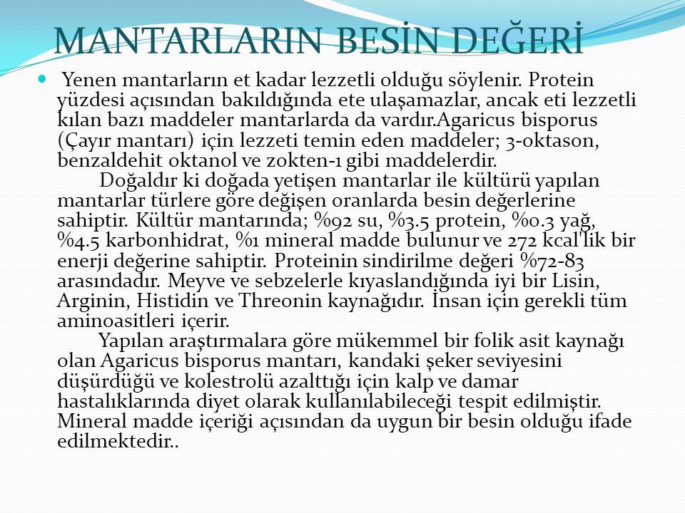 MANTARLARIN BESİN DEĞERİ