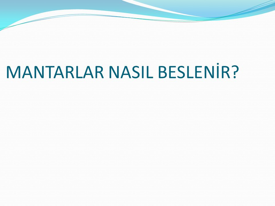 MANTARLAR NASIL BESLENİR