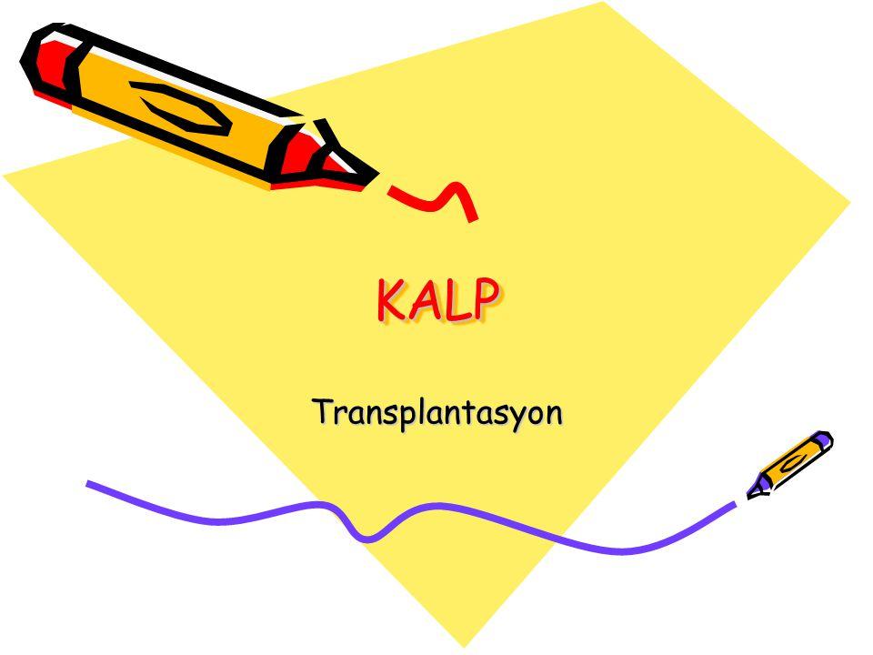 KALP Transplantasyon