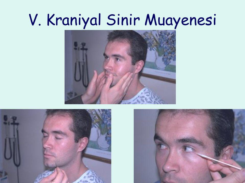 V. Kraniyal Sinir Muayenesi