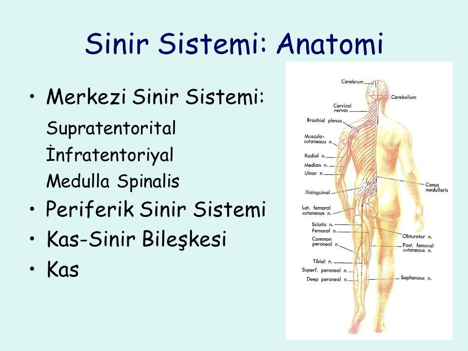 Sinir Sistemi: Anatomi