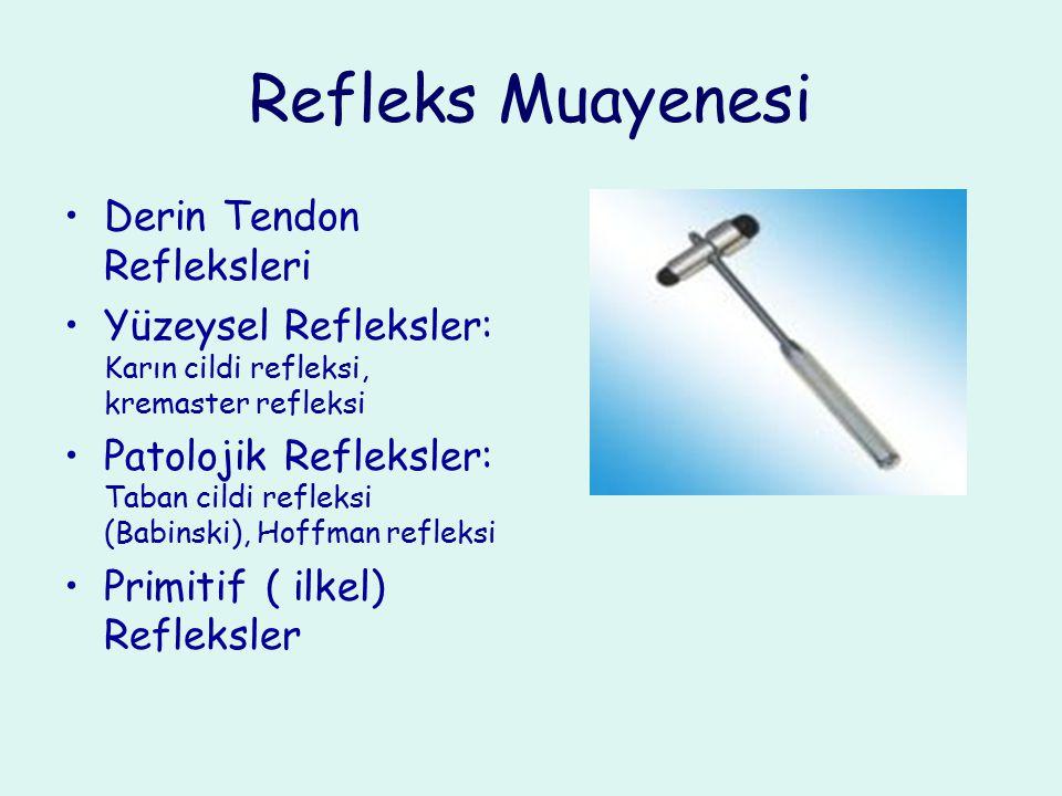 Refleks Muayenesi Derin Tendon Refleksleri