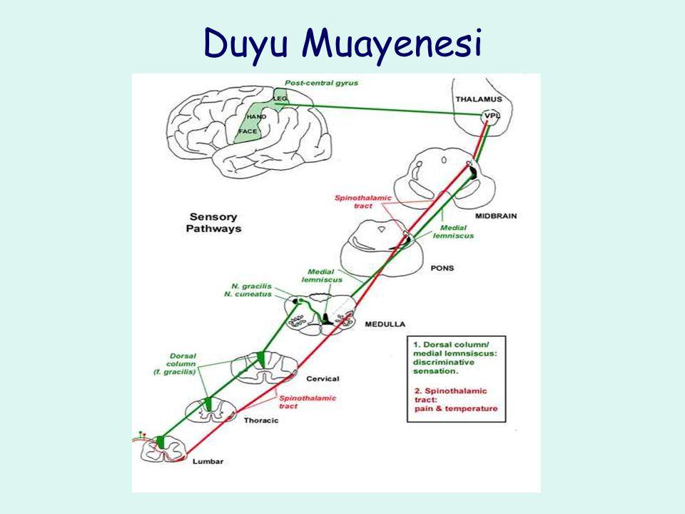 Duyu Muayenesi