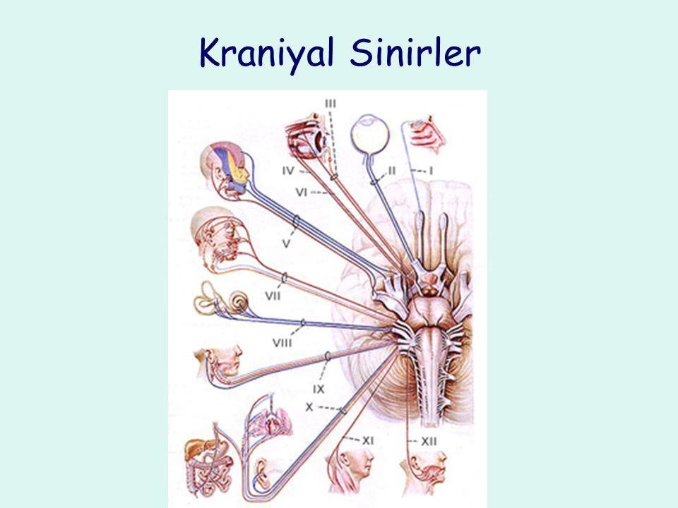 Kraniyal Sinirler
