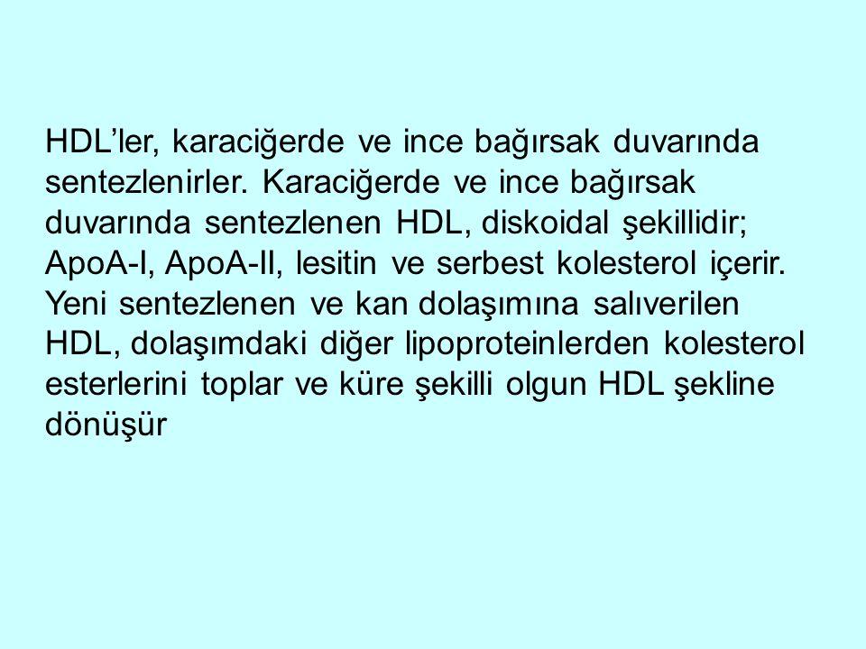 HDL'ler, karaciğerde ve ince bağırsak duvarında sentezlenirler