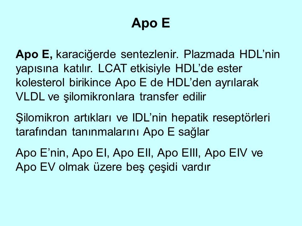 Apo E