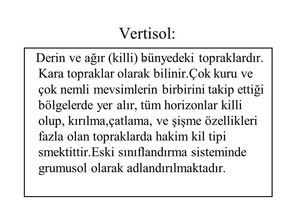 Vertisol: